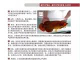 高端品牌龙鱼,高端水族器材