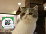 新乡哪里卖加菲猫 加菲猫价格 加菲猫哪里有卖