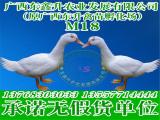 优质贵州鸭苗哪里有供应-贵港禽苗孵化厂