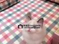 哈尔滨纯种布偶猫多少钱一只哈尔滨哪里卖布偶猫布偶猫的价格