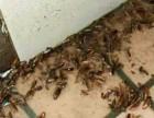 超市宾馆酒店灭蟑螂灭鼠