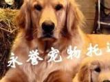 永誉专业/宠物回国/宠物出国/港澳台宠物运输