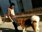 家庭寄养 宠物训导