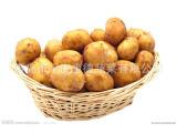种植基地蔬菜批发 新鲜优质土豆 马铃薯 质优价廉