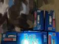 全新蓝钻Everclean猫砂25磅