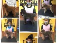 学习宠物美容 宠物美容师培训