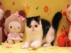 猫舍出售纯种健康波斯