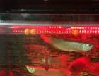 银龙鱼、鹦鹉鱼