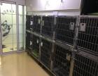 24小时急诊动物医院