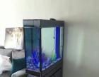 济南专业鱼缸清洗,水草缸造景,价格低,服务好
