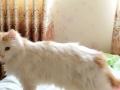 家养美女猫咪速求男朋友,