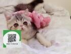 绵阳哪里卖加菲猫 绵阳哪里有宠物店 绵阳哪里卖宠物猫便宜