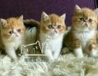 加菲猫异短45天接受预定