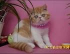 上海哪家宠物店好 淘宝店铺搜:双飞猫