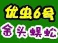 优虫6号金头蜈蚣养殖加盟