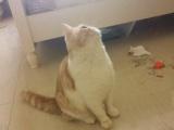 自家养的加菲猫。。