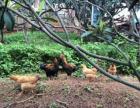 莆田清风寨【露营】【农家乐亲子活动】-追鸭抓鸡