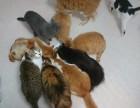 广州猫逗狗逗寄养 增设冷血两栖类寄宿