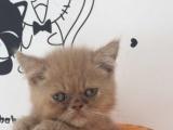 可爱猫咪找新家 有眼缘的赶紧