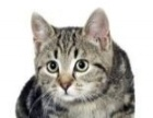 满月小萌猫求领养