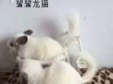 多彩龙猫宝宝