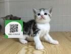 镇江在哪里卖健康纯种宠物猫 镇江哪里出售美短