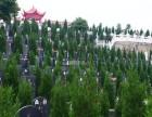 温州乐清长安陵园陵园