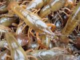 佛山风味小龙虾自助餐包办佛山楼盘暖场小龙虾自助餐海鲜茶歇上门