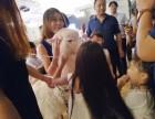 上海闵行区矮脚马出租-蓝孔雀租赁-神兽转租-婚礼庆典展览