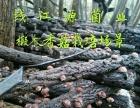 椴木香菇、黑木耳等菌菇干品