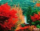 秋季仙台山赏红叶一日游 仙台山的红叶 是北京香山的20倍
