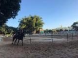 中山珠海骑马场-英格马术俱乐部