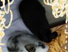 可爱兔子(一公一母),希望有喜欢的人领养。