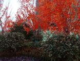 潍坊仿真树樱花树 景界园艺