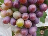 济南人的葡萄园好吃好玩