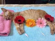 宠物火化价格 宠物殡葬价格 宠物火葬价格 宠物善终价格
