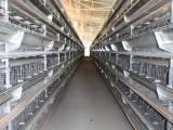 青岛9CLD系列层叠式蛋鸡设备加盟电话 蛋鸡设备 高效节能