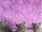 悄悄买回家的蓝猫宝宝低价卖了