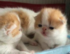 犬猫活体销售、宠物美容、寄养服务等