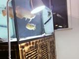 宁波本地出150x80x150底过滤龙鱼缸