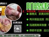 肌胃炎腺胃炎在鸡群中的危害