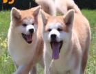 昆明哪里有狗狗卖昆明狗狗多少钱昆明哪里有狗狗领养