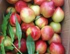 陕西油桃价格,陕西中油5油桃价格,陕西中油5油桃产地