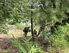 昆明真人CS 野战 占地120亩 G港防空洞丛林三大主题场地