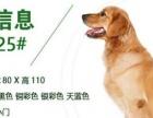 低价转让95成1.25米超大方管笼中大型犬狗笼金毛哈士奇用