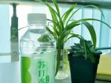 蕪湖里有蘇打水 蘇打水健康飲料 蘇打水批發 蘇打水公司