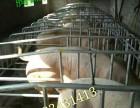 河北优质母猪产床价格 自产自销