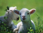 鑫枫牧业牛羊肉加盟