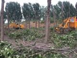 沧州带土球挖树机