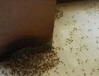 灭蚊蝇、老鼠等四害,服务上门。